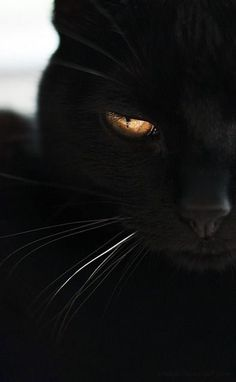 I am honestly more a dog person but I have kinda always wanted a black cat... They are so mysterious and beautiful.