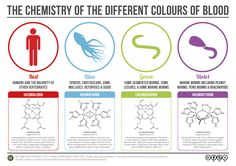 The Chemistry of Blood Colours