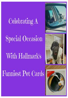 "#ad #FunnyPetCards Looking for a fun card that highlights furry family members? Then check out Hallmark's Funniest Pet Cards. Where 4 legs and a tail says ""I Love You."" #CollectiveBias"