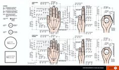 Measurements of the Human Hand