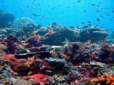 Nusa Lembongan Reef, Bali