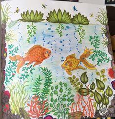Secret Garden Coloring Book Derwent Inktense Pencils