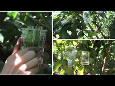 Guerrilha Marketing - Camp Nectar: Caixinha Natural  Creative Ambient Marketing