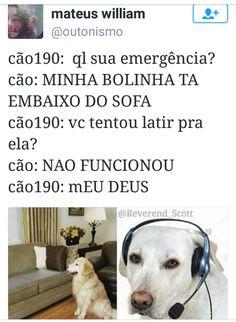 meme-cachorro-telefone