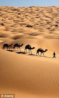 Ride a camel in the Sahara Desert