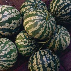 Heirloom Watermelon Varieties - Organic Gardening - MOTHER EARTH NEWS