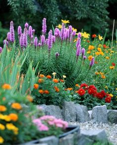 Rock gardens like this one can be designed to appear like an alpine meadow.