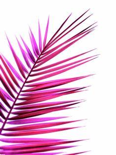 pink palm leaf II Art Print by Blackpool