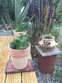 Geraniums & Strawberries in terracotta pots. Black Bamboo