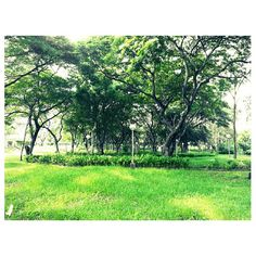 #green walk in the #park#chilling#relaxing#nature#philippines#フィリピン#公園#緑