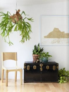 Beautiful Oversized Hanging Plants:
