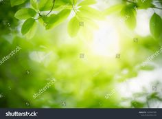 Closeup Nature View Green Leaf On ภาพสต็อก (แก้ไขตอนนี้) 1425947285 Nature Green, Green Leaf Background, Nature View, Green Leaves, Close Up, Stock Photos
