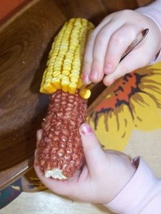 Picking corn on the cob with tweezers in preparing the pincer grip - SP.