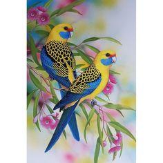 Beautiful Flowers Wallpapers, Beautiful Nature Wallpaper, Cute Birds, Pretty Birds, Funny Birds, Most Beautiful Birds, Animals Beautiful, Exotic Birds, Colorful Birds