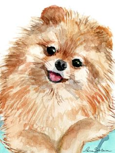 The 15 Cutest Pomeranian Drawings & Page 3 of 3 & PetPress Source by The post The 15 Cutest Pomeranian Drawings Animal Paintings, Animal Drawings, Art Drawings, Animals Watercolor, Watercolor Paintings, Watercolor Design, Cute Dog Drawing, Pom Dog, Daisy Dog