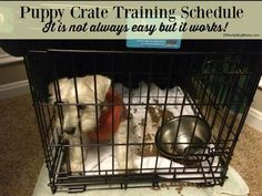 Puppy Crate Training Schedule that REALLY works. I swear by the success of using it!