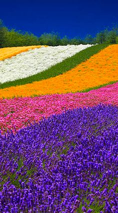 Beautiful flower farm in Hokkaido, Japan. Share ♥ My Beautiful World ♥ Beautiful World, Beautiful Gardens, Beautiful Flowers, Beautiful Places, Amazing Places, Beautiful Gorgeous, Simply Beautiful, Foto Top, Jolie Photo