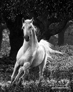 The Stallion in the Trees  Fine Art Horse by WildHoofbeats on Etsy, $35.00