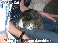 Very Funny Cats 64 -  #animals #animal #pet #cat #cats #cute #pets #animales #tagsforlikes #catlover #funnycats Yay it is caturday! Please join my group!–    I can has cheezburger rules!–  LOLcats will rule the world and there will be no more violence and war on this planet.Fun and happyness is what they... - #Cats