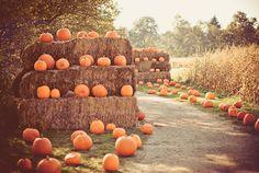 Lost In October — wicked-autumn:   Halloween everyday