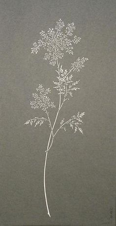 PAPER CUT-OUT OF QUEEN ANNE'S LACE                                                                                                                                                      More