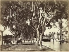 A very beautiful picture of the island Street in Cairo late nineteenth century