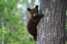 Urge Investigators to Prosecute Bear Cub's Murderer ! PLEASE... - Care2 News Network