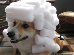 corgi in cotton ball wig :D