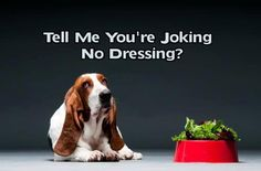 Yep that's exactly the way bassets are so spoiled:)