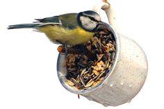 Mit selbst gemachten Meisenknödeln, Futterglocken oder Kuchen auf Fettgrundlage kann man Vögel glücklich machen. Wie Sie selbst solches Futter herstellen können, zeigen wir Ihnen in einer kurzen Video-Anleitung.