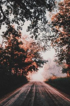 Find the beauty in little things road photography, fall nature photography, aesthetic photography nature Beautiful World, Beautiful Places, Beautiful Forest, Beautiful Gorgeous, Landscape Photography, Nature Photography, Photography Aesthetic, Photography Flowers, Photography Backgrounds