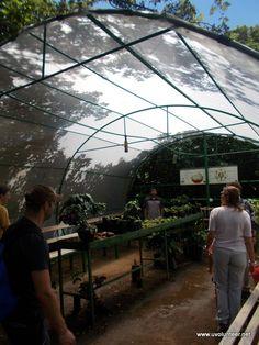 Volunteer Abroad in Costa Rica, Ghana & Thailand Volunteer Overseas, Volunteer Groups, Volunteer Work, Beautiful Flowers Garden, Beautiful Gardens, Volunteer Opportunities Abroad, Sandy Beaches, Free Time, Volunteers