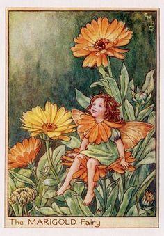 Marigold Flower Fairy Vintage Print c1950 Cicely by TheOldMapShop