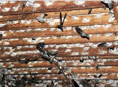 Swiftlet Nest, Nests, Farming, Sustainability, Concept, Business, Inspiration, Biblical Inspiration, Store