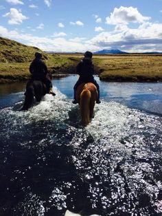 Icelandic Horse World - Breeding Tour and Riding near Hella