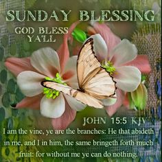 Sunday Love, The Forth, Blessings, Vines, Blessed, Butterfly, Plants, Plant, Arbors