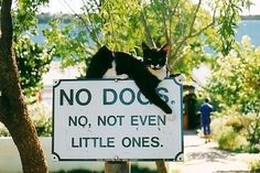 We knew there was discrimination against dogs out there, but this seems a little drastic. #cats