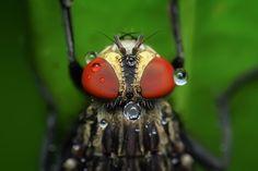 Mouchy, Hmyz, Makro, Pešť, Zvíře