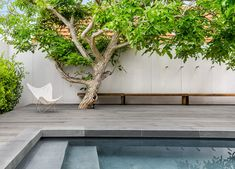 Beautiful feature tree through greyed off decking around a pool. Such a beautiful modern pool landscape design. Beautiful feature tree through greyed off decking around a pool. Such a beautiful modern pool landscape design. Architects Melbourne, Moderne Pools, Courtyard Pool, Pool Landscape Design, Landscape Design Melbourne, Street Pictures, Pool Landscaping, Pool Designs, Gardens