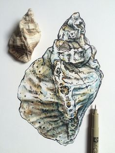 Musing of a witchy writer Painting Inspiration, Art Inspo, Shell Drawing, Natural Form Art, Natural Forms Gcse, A Level Art Sketchbook, Sea Life Art, Observational Drawing, You Draw