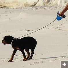 retractable leash with weight