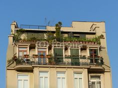Altbau mit bepflanzten Kartons im Galataviertel in Istanbul Beyoglu in der Türkei