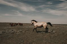 Horses Southern Alberta by Maria St. Wander, Camel, Southern, Horses, Explore, Animals, Design, Animales, Animaux