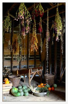 Drying|Flowers|Herbs|☆☆