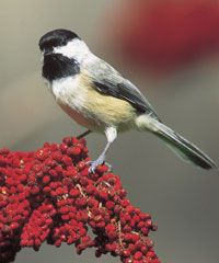 Wild Birds Unlimited - Educational Resources