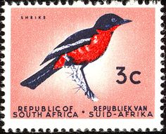 Stamps showing Crimson-breasted Shrike Laniarius atrococcineus, with distribution map showing range Vintage Stamps, Stamp Collecting, Coat Of Arms, South Africa, Gallery, Afrikaans, Image, Country, 30th