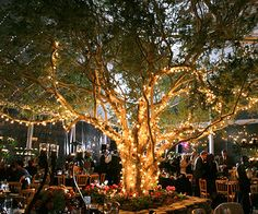 For an outdoor eventing wedding reception,cover a tree with lights for a romantic feel.