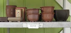 Orchid Bonsai Pots..