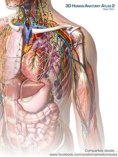 Anatomía UBA