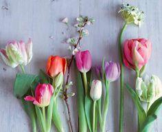 Papageien-Tulpen, gefüllte Tulpen, Darwin-Hybrid-Tulpen, Kirsche, Triumph-Tulpen, Milchstern und Pfingstrosen-Tulpen (von links nach rechts). Foto: Julia Hoersch via Living at home